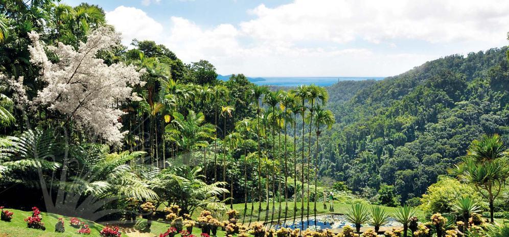 Les jardins de Balata (Martinique)